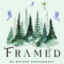 Framed By Nature Photography